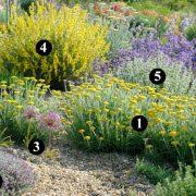 Alternativas Al Riego, Plantas Resistentes A La Desecación